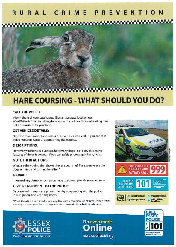 Hare Coursing Poster
