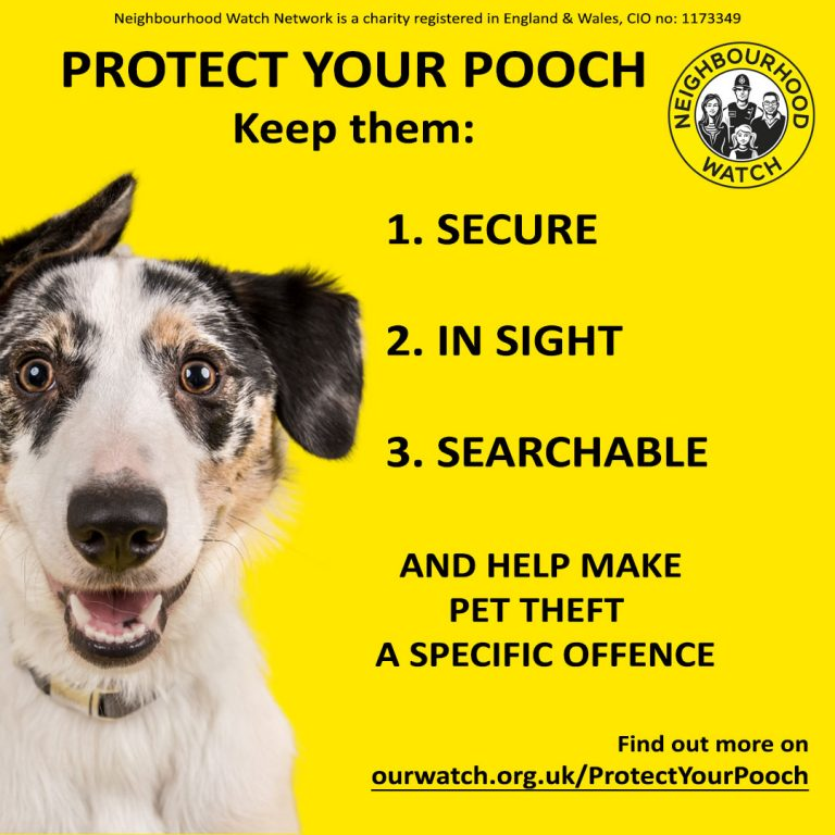 Protect-your-pooch infographic